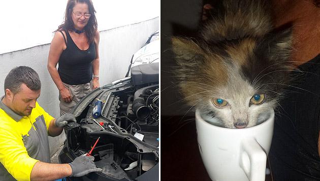 Chef befreite Katze aus Motorhaube von Firmenauto (Bild: Herbert Hietler)