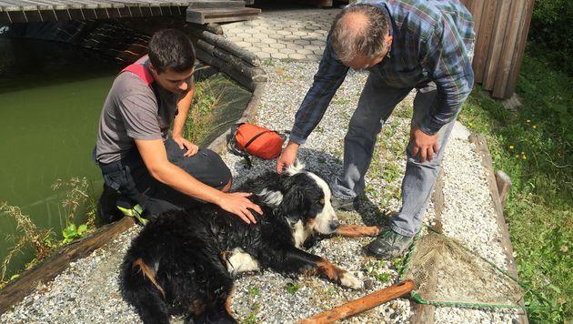 Berner Sennenhund in Teich gestürzt - gerettet (Bild: FF Pöllau)