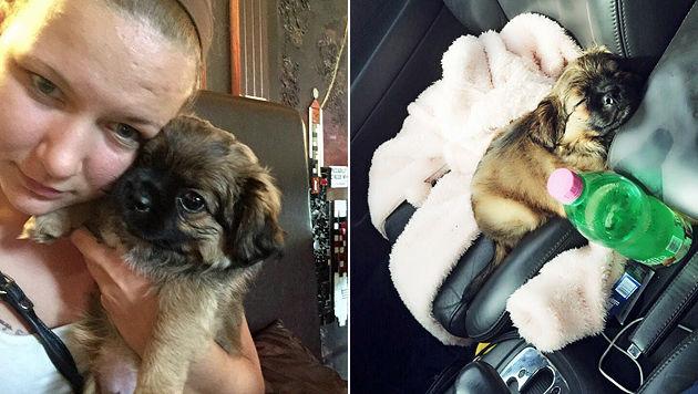 Patrizia Kowald entdeckte den kleinen Hund im Müll. (Bild: Kowalt)