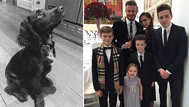 """Die Beckhams haben ein neues Familienmitglied: Hund """"Olive"""". (Bild: instagram.com/victoriabeckham)"""
