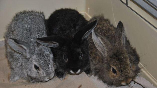 Die Kaninchen mussten einige Zeit ohne Versorgung durchhalten. (Bild: Tierheim Dechanthof)