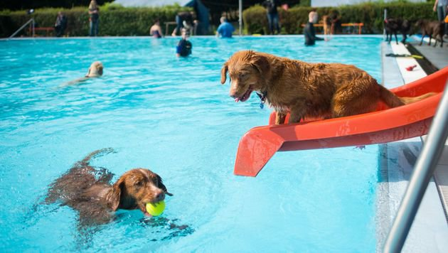"Badespaß durch die Initiative ""Hund im Freibad"" (Bild: APA/dpa/Nigel Treblin)"