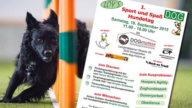Mitmachen beim Sport-, Spaß- und Hundetag von Loys (Bild: dog-motion.at, Loy's)