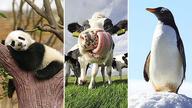 15 tierische Fakten, die Sie noch nicht wussten (Bild: thinkstockphotos.de)