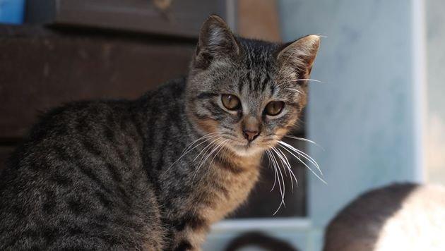 Katze im Abflussrohr: Ausgang mit Ball blockiert (Bild: Pfotenhilfe/Sonja Müllner)