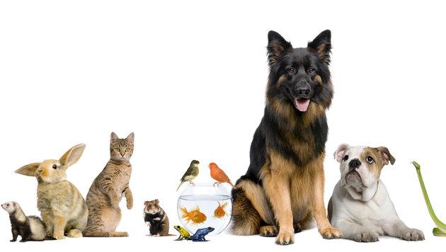 Wenn Tiere Leben retten - fünf wahre Geschichten (Bild: thinkstockphotos.de)