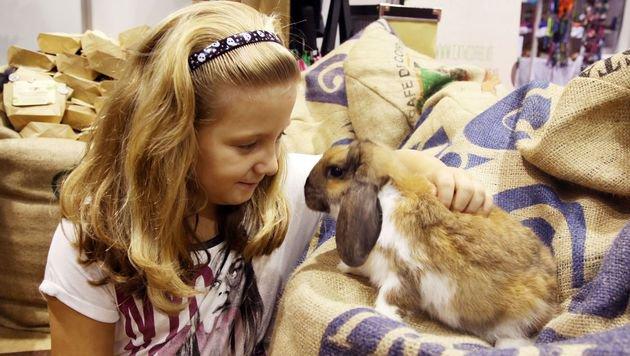 Auch süße Kleintiere gibt es in der Messehalle 2. (Bild: Uta Rojsek-Wiedergut)