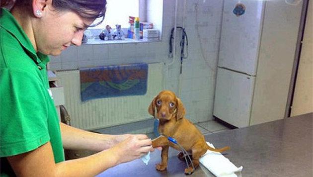 Diese Tiere wollen auf keinen Fall zum Arzt (Bild: iraffiruse.net)