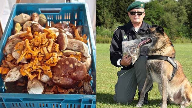 Bergwächter Peter Cech mit Spürhund Santos (Bild: Hannes Wallner)