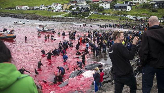 "Aktivistin Köhl: ""Wal-Massaker endlich stoppen!"" (Bild: Ulrike Köhl)"
