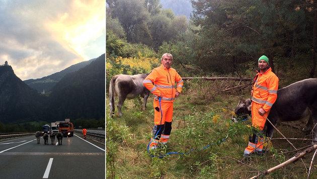 Walter Kofler (l.) und Bernhard Schatz versuchten sich erfolgreich als Cowboys. (Bild: Asfinag Tirol/Holzedl)