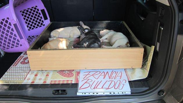 Illegaler Tiertransport in Kärnten aufgeflogen (Bild: Vier Pfoten (Symbolbild))