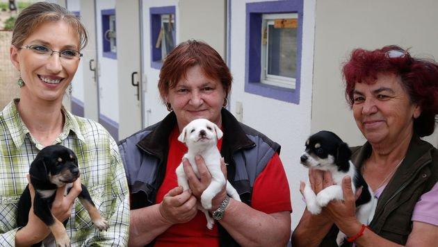 Ein gutes Team: Helga (li.) und Maria (re.) unterstützen Eleonore Schandl seit vielen Jahren. (Bild: Zwefo)