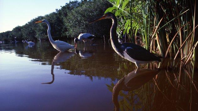 ...wo man die Vogelwelt Floridas aus der Nähe betrachten kann. (Bild: thinkstockphotos.de)