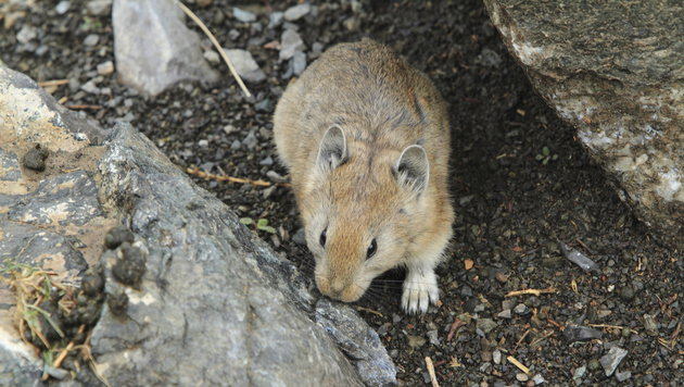 Neubau im Grünland: Tod für Hamster & Co.? (Bild: thinkstockphotos.de (Symbolbild))