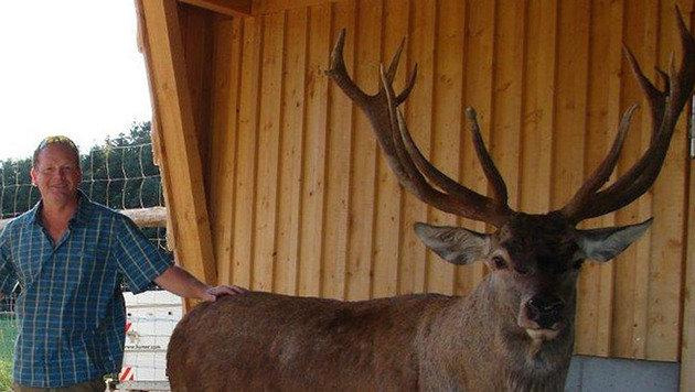 Gerald Ragginger ist nicht nur Jäger, er züchtet auch Dam- und Rotwild in einem großen Gehege. (Bild: Ragginger)