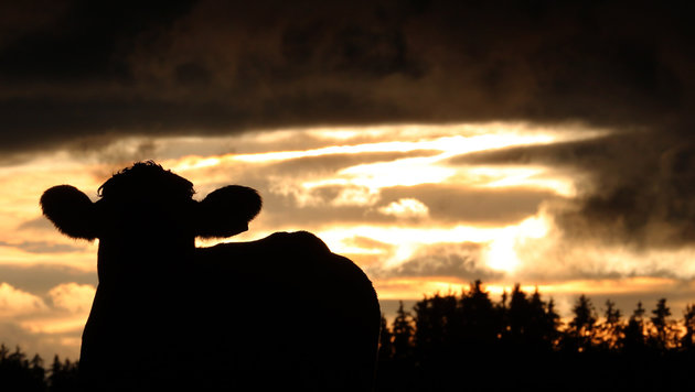 Ein Mix aus Sonne und Wolken mit bis zu 21 Grad (Bild: AP)