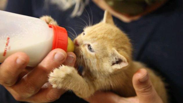 Verwahrloste und kranke Babykatzen in OÖ gerettet (Bild: Pfotenhilfe)