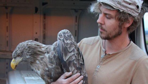 Der Seeadler kann in Kürze wieder in die Freiheit entlassen werden. (Bild: EGS/Schindlauer)