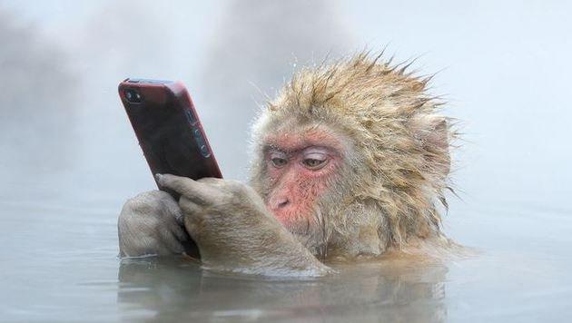 """""""13 coole WhatsApp-Kürzel und was sie bedeuten (Bild: Pinterest/Marsel van Oosten)"""""""