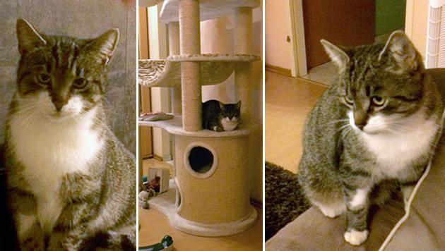 Katze nach 14-monatigen Verschwinden wieder daheim (Bild: Privat)