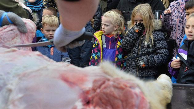 Dänischer Zoo zerlegte Löwen vor Augen von Kindern (Bild: AP)