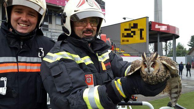 Der Vogel wurde befreit und der Tierrettung übergeben. (Bild: APA/MA 68 LICHTBILDSTELLE)