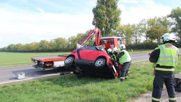 """Whippet-Hündin """"Io"""" lief nach Autounfall davon (Bild: Feuerwehr Schwechat)"""