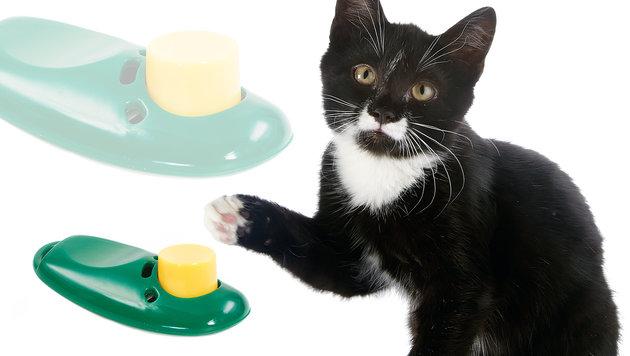 So funktioniert das Clicker-Training mit Katzen (Bild: thinkstockphotos.de)
