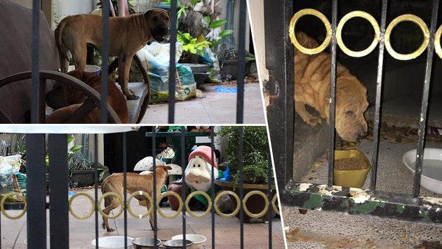 Frau füttert hungernde Hunde in gepfändetem Haus (Bild: facebook.com/Pia Triviño)