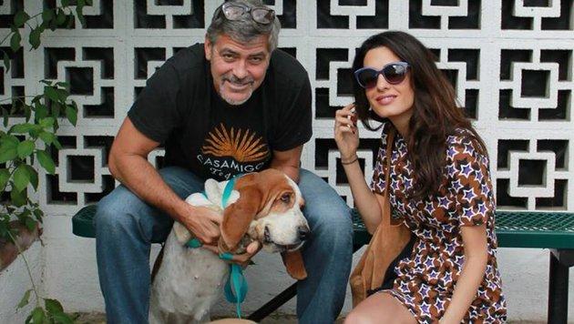 George und Amal Clooney haben Hund Millie aus dem Tierheim geholt. (Bild: Facebook.com)
