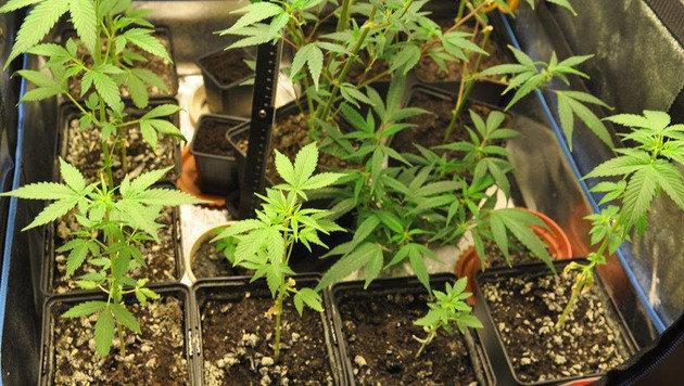 Klagenfurter postete Cannabis-Fotos auf Instagram (Bild: LPD Kärnten)