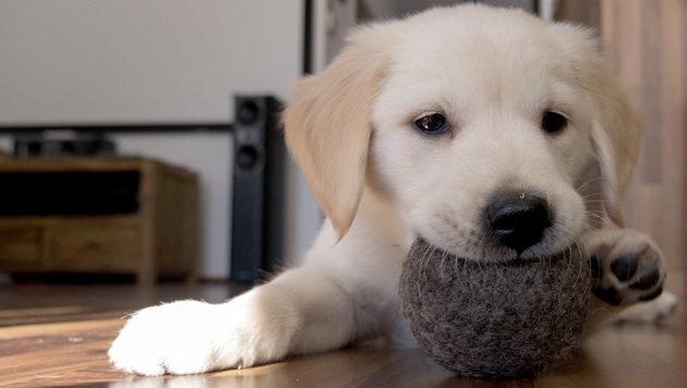 Giftfreies Hunde- und Katzenspielzeug aus Wolle (Bild: dieHirschIN)