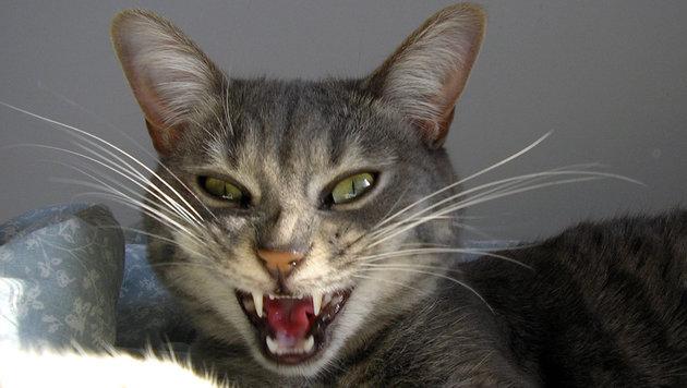 Hauskatzen würden uns fressen, wenn sie es könnten (Bild: flickr.com/Lucie Provencher)