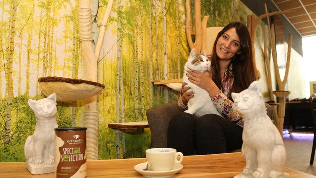 Kaffeegenuss mit schnurrenden Tierschutz-Katzen (Bild: Evelyn Hronek)