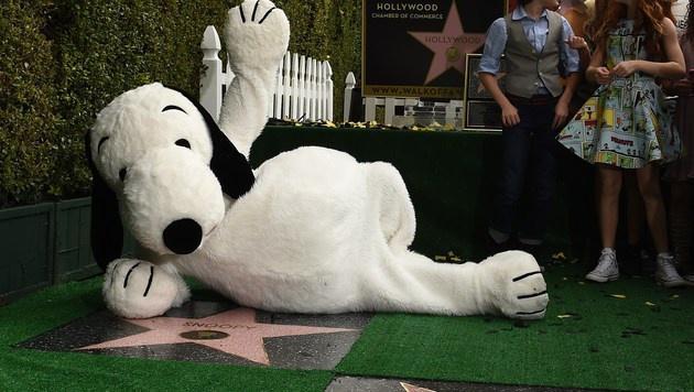 """Snoopy hat jetzt auch einen Stern am """"Walk of Fame"""". (Bild: APA/AFP/ROBYN BECK)"""