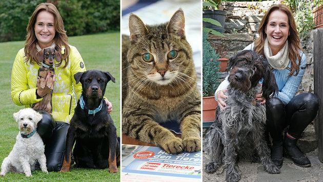 """Maggie Entenfellner mit ihren Schützlingen. Mitte: Die blinde """"Sissy"""" lebt im neuen Katzenhaus. (Bild: Klemens Groh, Peter Tomschi)"""