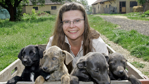 Claudia Herka kämpft gegen Tierleid. (Bild: Klemens Groh)