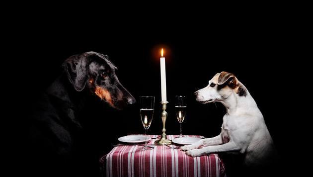 """Erster Hunde-Weihnachtsmarkt Wiens eröffnet! (Bild: facebook.com/doggydatevienna, Shutter Dogs 2015)"""