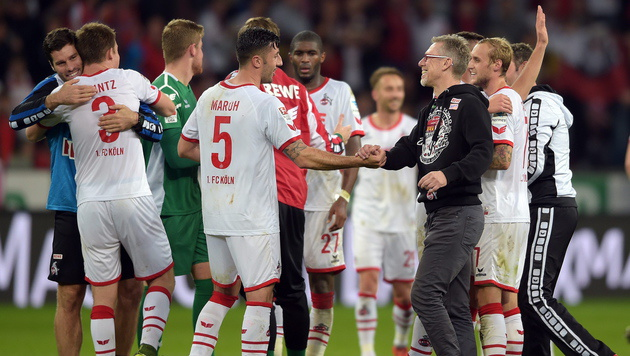 """Stöger-Ziel mit Köln: """"So gut wie letzte Saison!"""" (Bild: APA/EPA/FEDERICOGAMBARINI)"""
