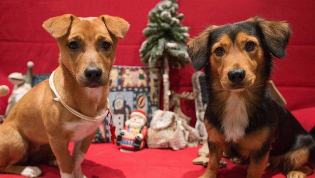 Der erste Hunde-Weihnachtsmarkt Wiens eröffnet (Bild: HFKL/Beatrix Kovats)