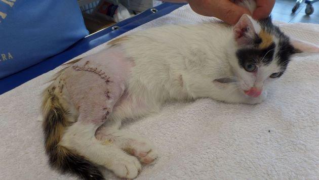 """Steirer Tierarzt baut """"Schutzengeldorf"""" für Katzen (Bild: Schutzengeldorf für behinderte Katzen)"""