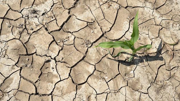 Österreich drohen vermehrt Hitzewellen und Dürre (Bild: APA/dpa-Zentralbild)