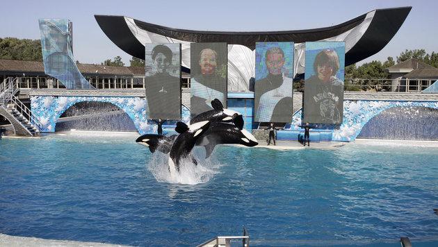 Orca-Show in San Diego (Bild: AP)