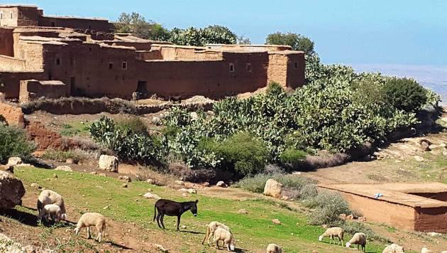 Esel, Schafe und jahrhundertealte Häuser - auch das ist Marrakesch. (Bild: Christa Blümel)