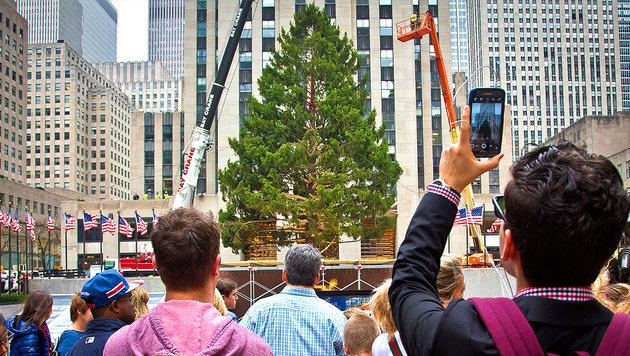 NY: Politiker fordert E-Mail-Adressen für Bäume (Bild: AP)