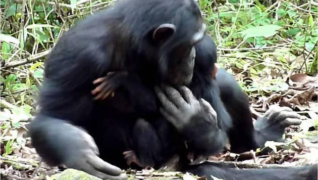 Die Schimpansin mit ihrem behinderten Nachwuchs (Bild: Michio Nakamura)