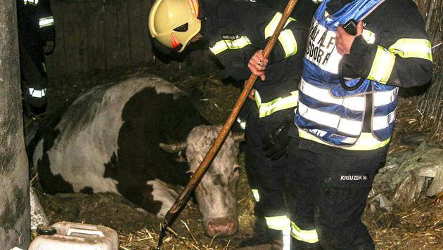 Für die Helfer war der Einsatz eine äußerst schweißtreibende Angelegenheit. (Bild: APA/FF OHLSDORF)