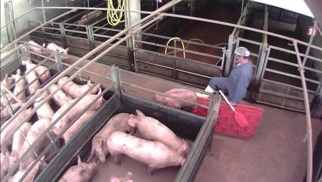 Ein Ausschnitt aus einem der Videos. Link: www.vgt.at