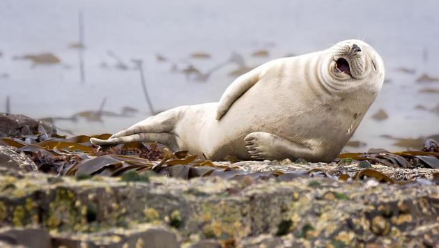Das sind die witzigsten Tierfotos des Jahres (Bild: Julie Hunt/Comedy Wildlife Photography Awards)